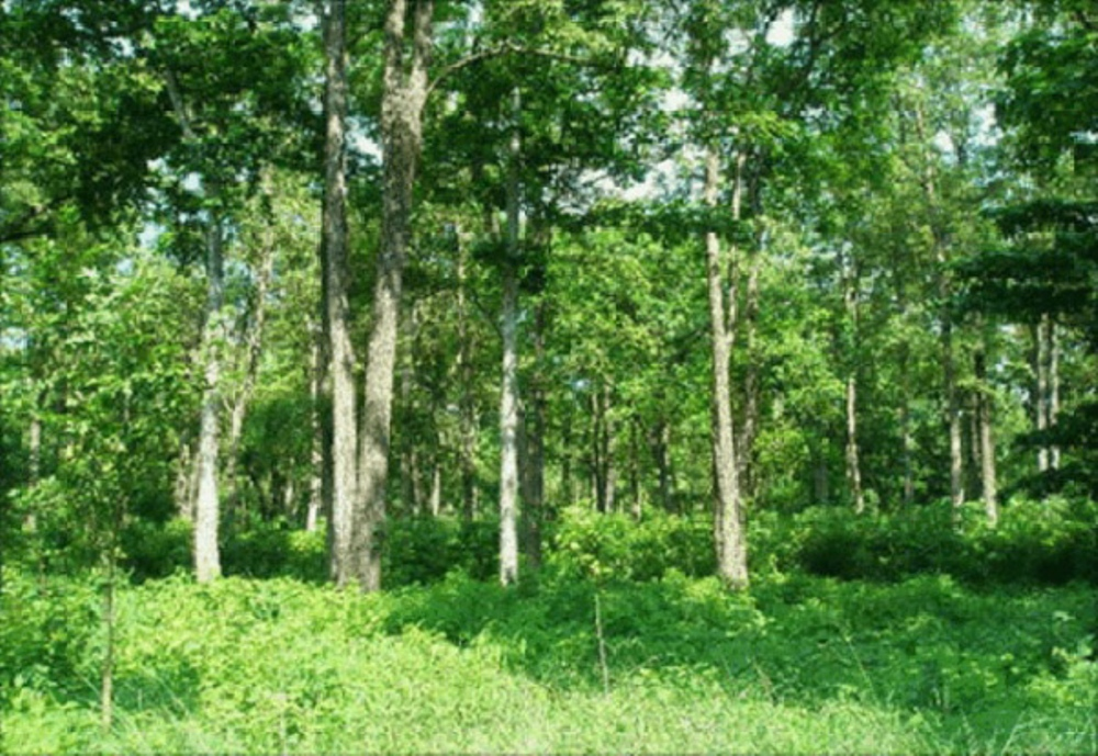 आयस्रोत र समुदाय परिवर्तनको आधार बन्दै सामुदायिक वन