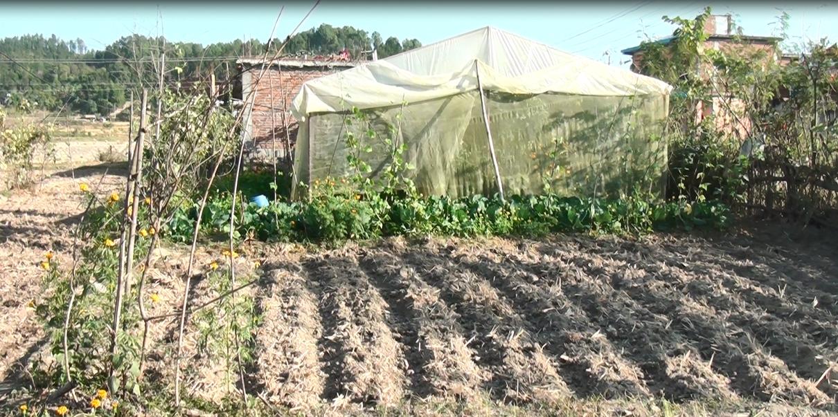 स्थानीय उत्पादनले बजार प्रतिस्पर्धा गर्न नसक्दा किसान मर्कामा