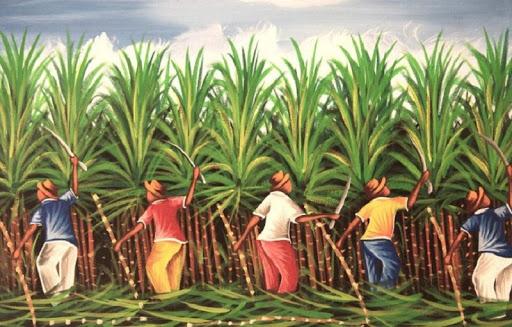 आन्दोलनको तयारीमा उखु किसान