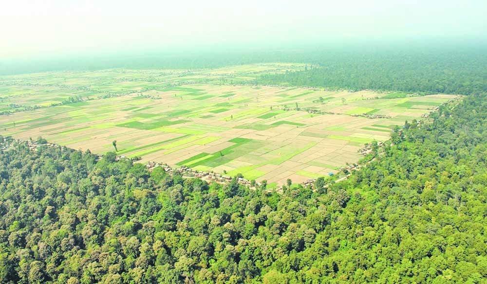 निजगढ विमानस्थलको पहुँच सडकका लागि चार हजार रुख काटिने
