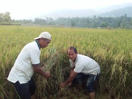 पाल्पामा  चैते धान उत्पादन बृद्धि